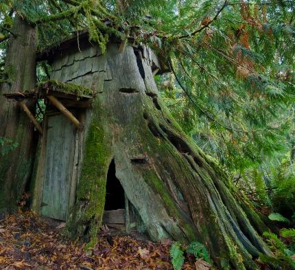 contour-stump-house